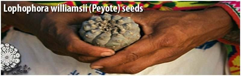peyote and san pedro seeds from different species