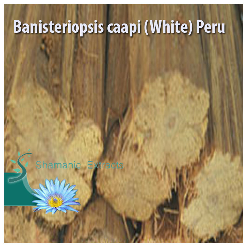 Banisteriopsis caapi White Peru
