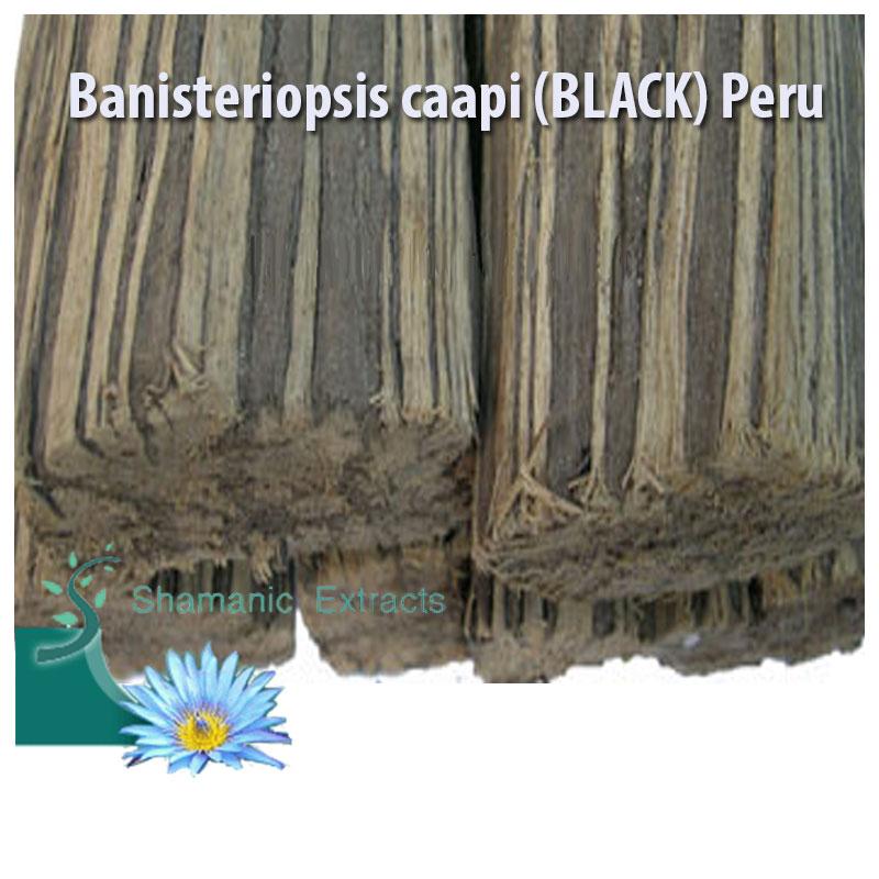 Banisteriopsis caapi BLACK Peru