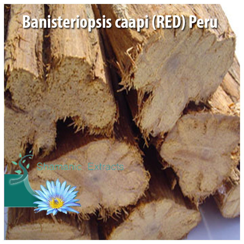 Banisteriopsis caapi RED Peru