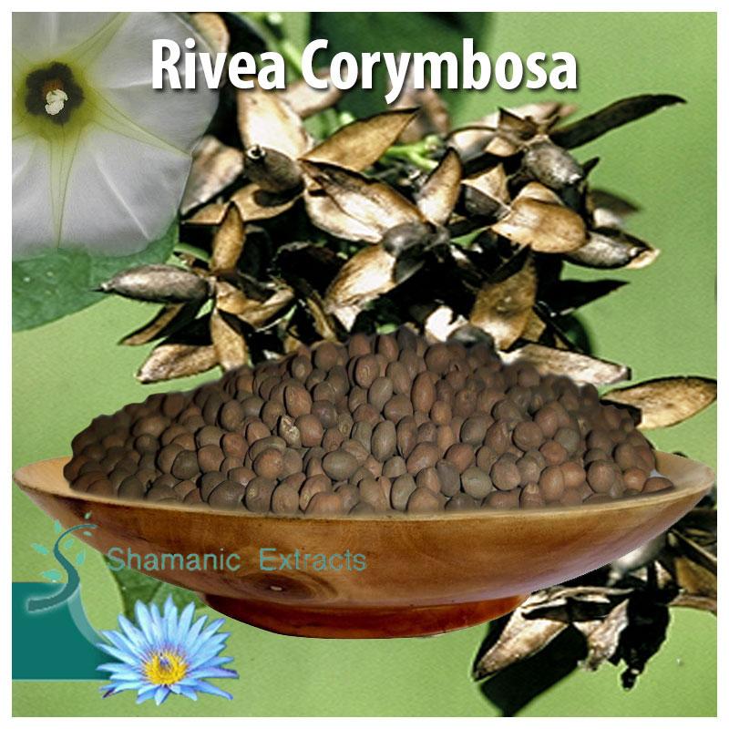 Rivea corymbosa seeds