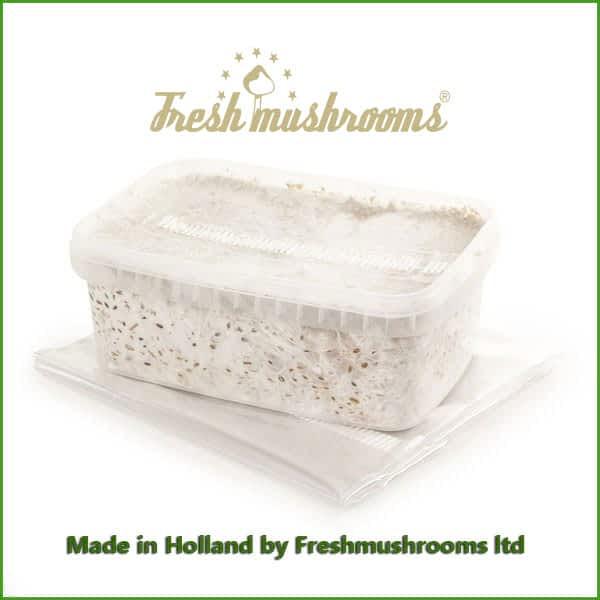Albino A grow kit freshmushrooms