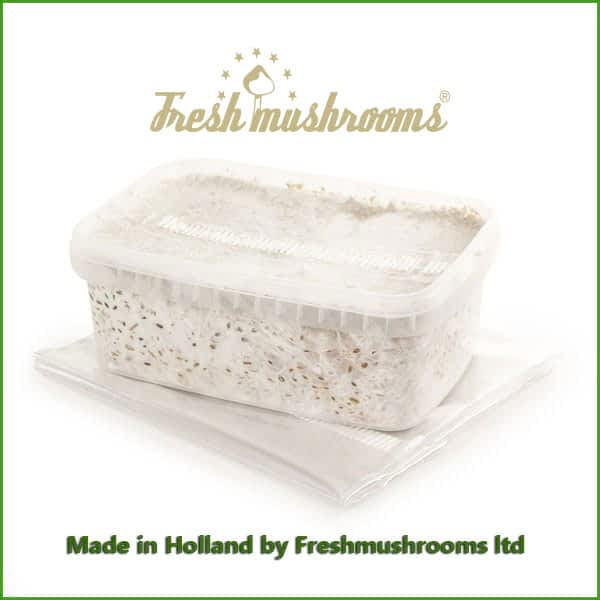 Thai 1200ml Grow Kit Freshmushrooms