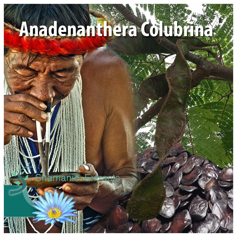 Anadenanthera Culubrina var. Cebil