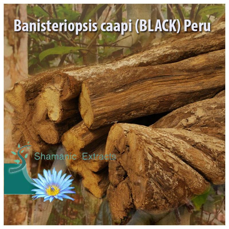 Banisteriopsis caapi (BLACK) Peru