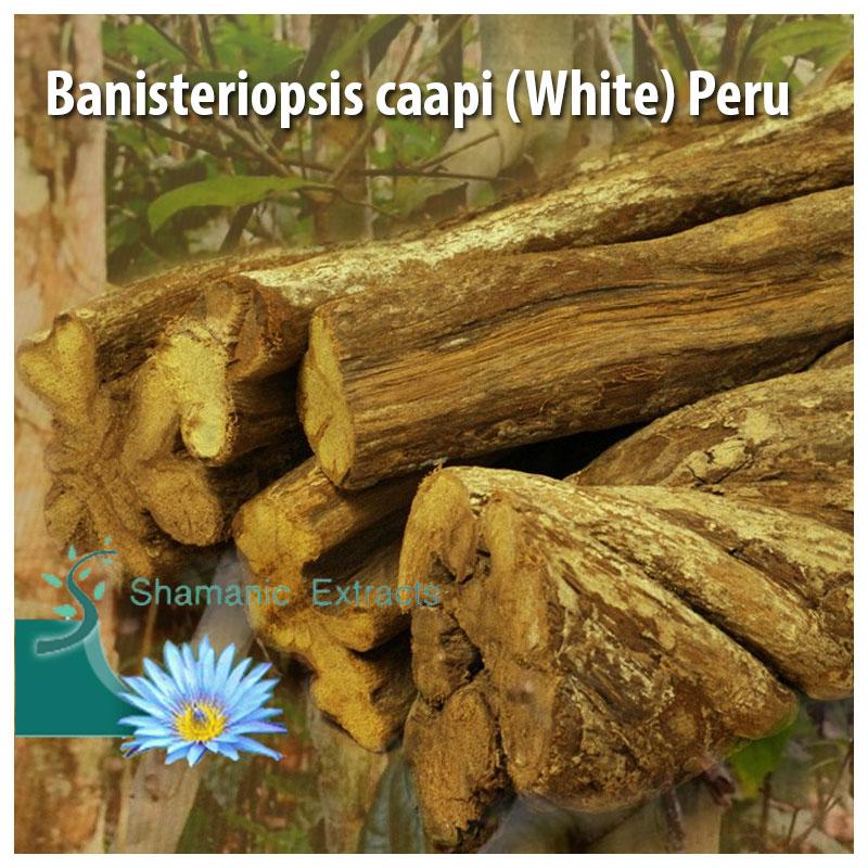 Banisteriopsis caapi (White) Peru