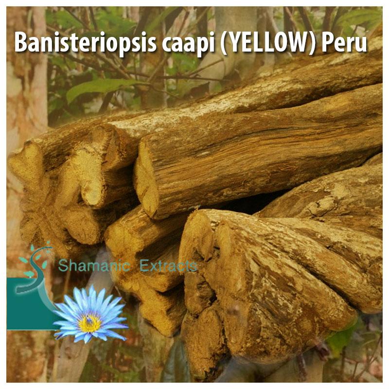 Banisteriopsis caapi (YELLOW) Peru