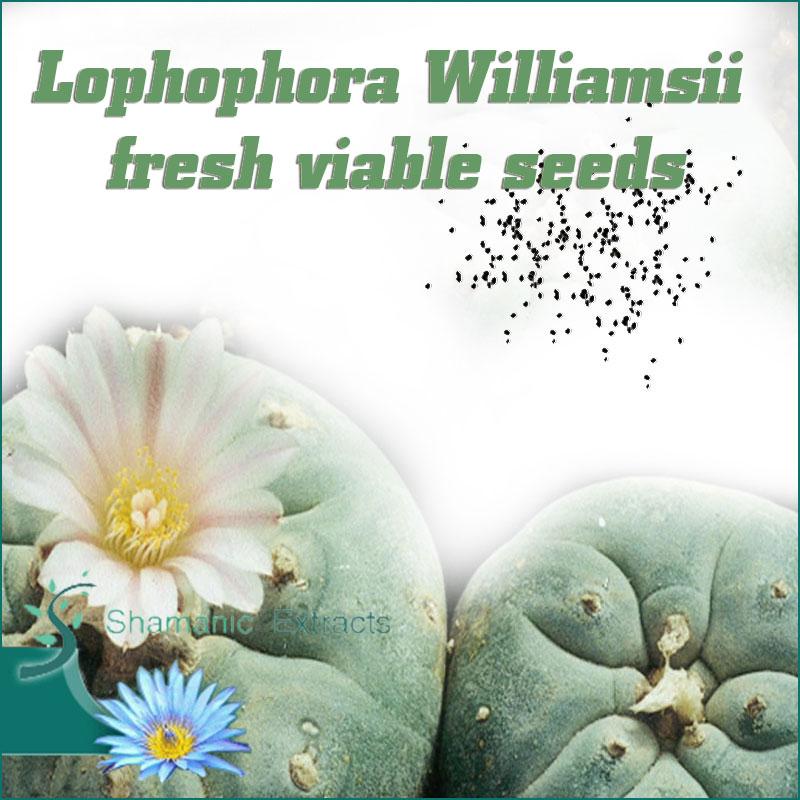 Lophophora Williamsii seeds