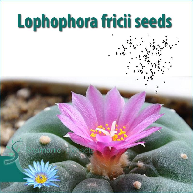 Lophophora fricii seeds