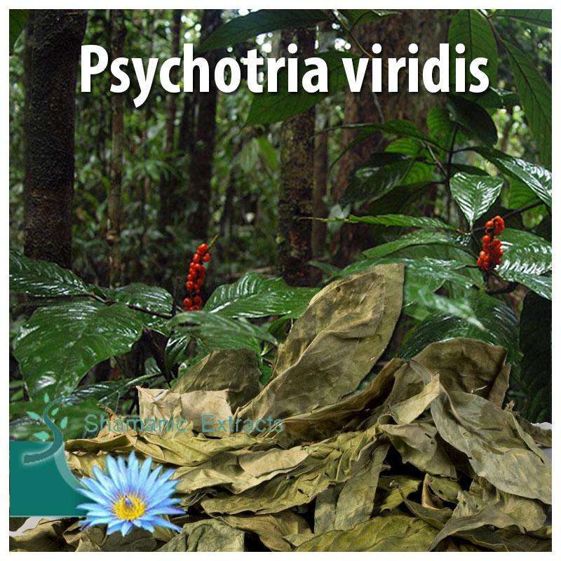 Psychotria viridis 28 grams