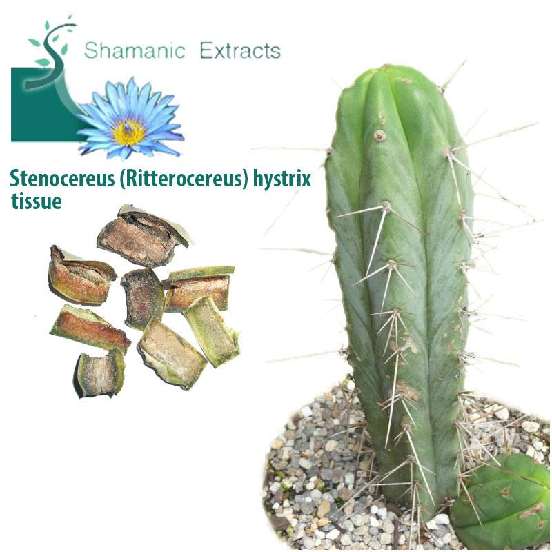 Stenocereus ritterocereus hystrix tissue