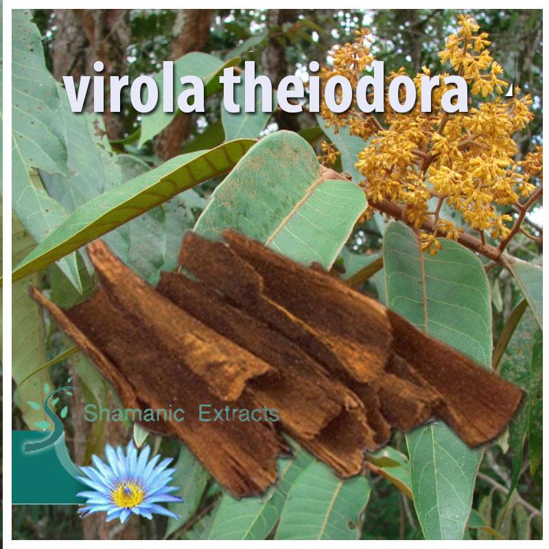 Virola theiodora