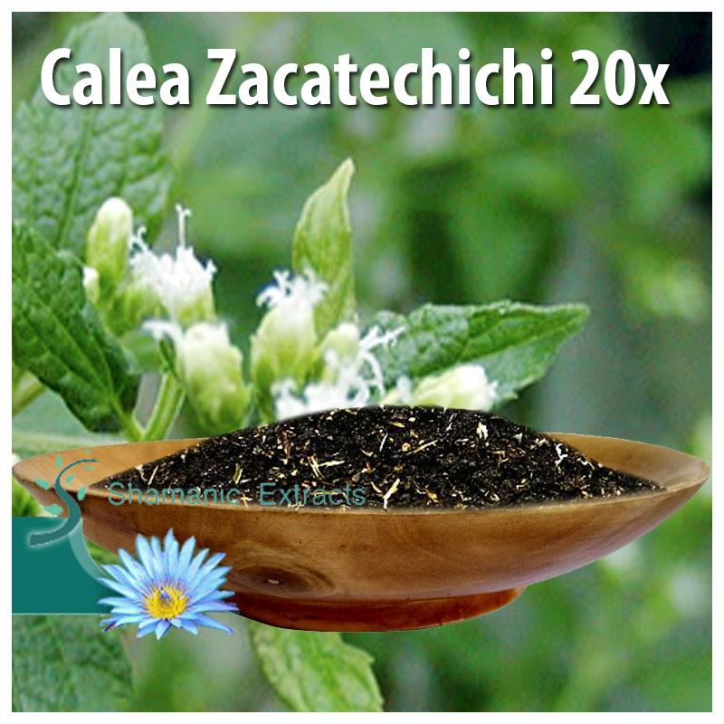 Calea Zacatechichi 20x