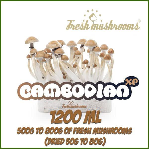 Cambodian 1200ml Grow Kit Freshmushrooms mycelium