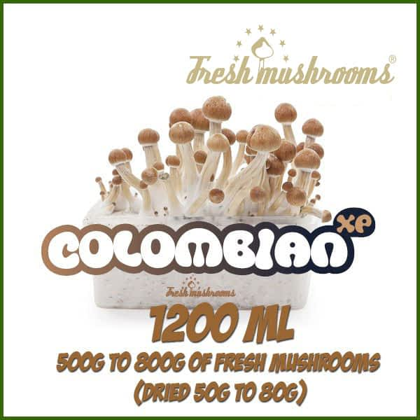 Colombian 1200ml Grow Kit Freshmushrooms