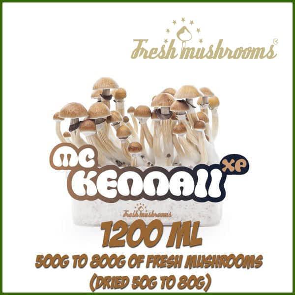 1200ml Grow Kit Freshmushrooms