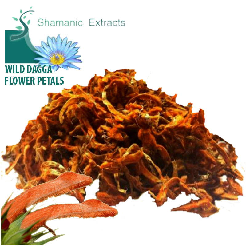 100% pure! Wild Dagga Flower PETALS