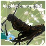 Alepidea amatymbica