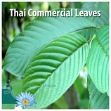 THAI COMMERCIAL KRATOM LEAVES