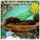KRATOM SEEDS VIABLE
