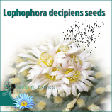 Lophophora decipiens seeds