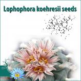 Lophophora koehresii seeds