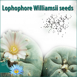 Lophophore Williamsii seeds