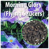 Morning Glory (Flying Saucers)