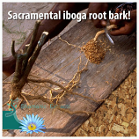 SACRAMENTAL IBOGA ROOT BARK