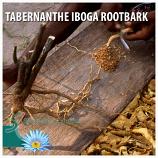 TABERNANTHE IBOGA ROOTBARK