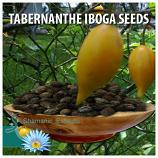 TABERNANTHE IBOGA SEEDS