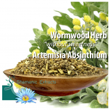 Wormwood (Artemisia absinthum)
