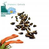 Leonotis Leonurus seeds